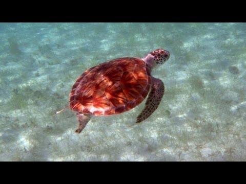 Best US Virgin Islands Snorkeling