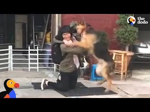 German Shepard Dog Reunited With Owner is SO EXCITED | The Dodo
