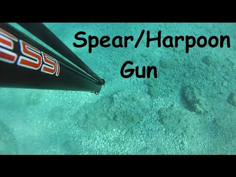 Spearfishing in Greece: Harpoon-Gun Fish Shots