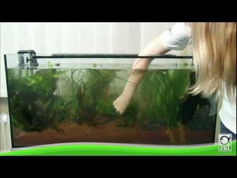 Jbl Aquarium Einrichten Youtube