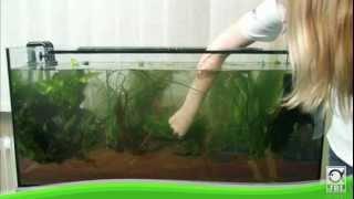 JBL - Aquarium einrichten