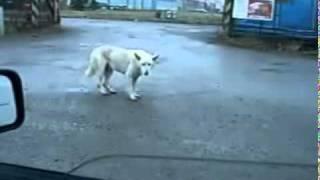 Прикол Смотреть всем Собака жжёт Кошки  Коты Дог Дэнс