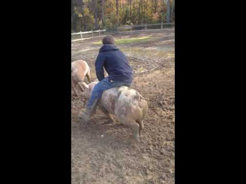 My brother Is a hog riding fool!  funnest piggy back ride ever