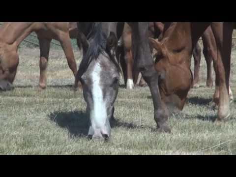 35 Young Horses Rescued from Slaughter