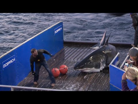Mary Lee Starts OCEARCH's Journey To Expedition Nova Scotia 2020