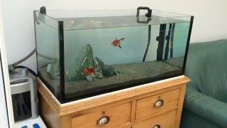 Custom made fancy goldfish aquarium