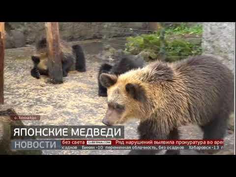 Японские медведи. Новости. 24/01/2020. GuberniaTV