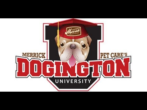 Merrick Pet Care's Dogington University Treats n' Training: Rescue Dogs
