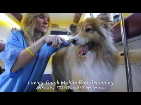 Loving Touch Mobile Dog Grooming - Molly the Sheltie by Kelli