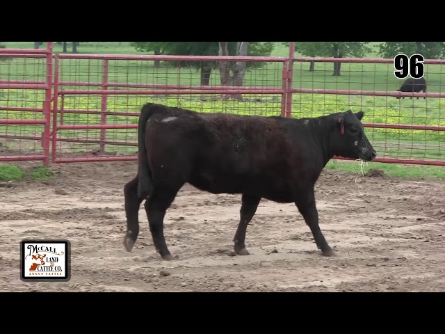 McCall Land and Cattle Lot 96