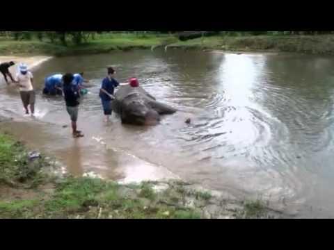 Izarra Washes an Elephant