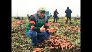 видео Особенности выращивания моркови