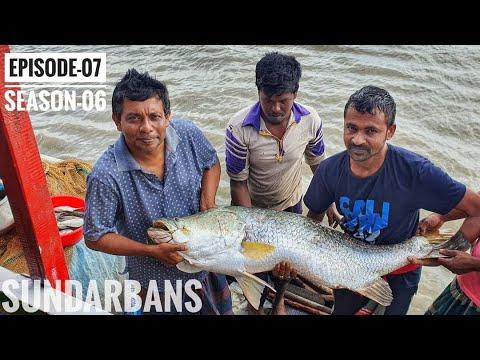 Download ছোট্ট খালে আটক বিশাল পাতারি মাছ | সুন্দরবন | সিজন ০৬ | পর্ব ০৭ | Sundarbans | Mohsin ul Hakim