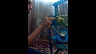 Угарное видео (как кусает попугай)(, 2015-02-28T05:08:23.000Z)