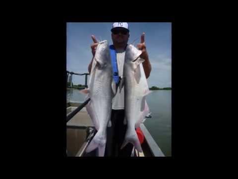 Electrofishing For Kansas Blue Catfish