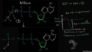 4 ATP hydrolysis mechanism video   Khan Academy