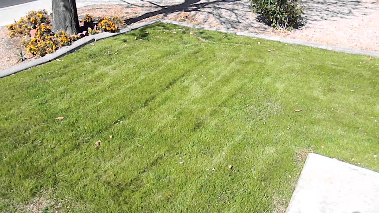 how to plant winter grass update 34 months after planting the rye grass youtube - Winter Rye