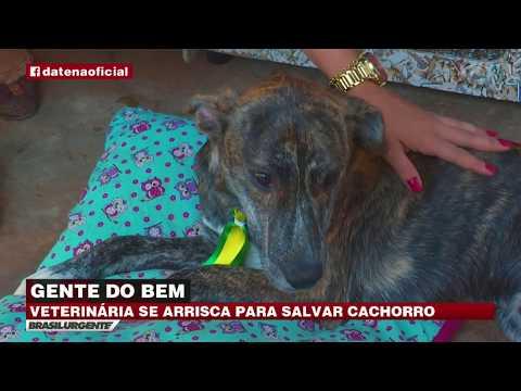 Veterinária salva cachorro de afogamento em SP
