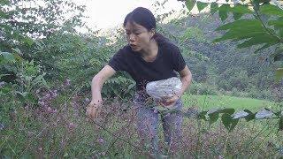 燕子去地里挖高丽参,还收集了很多种子,明年想种一亩地