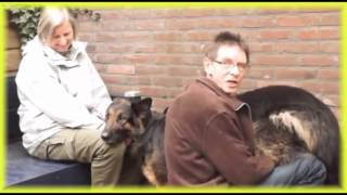 Repeat youtube video Best Animal Video Sex Dog with Adogy Sexy Funny Video