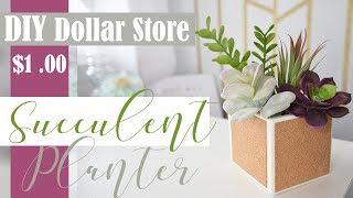 Dollar Tree DIY l Succulent Room Decor Idea!!!