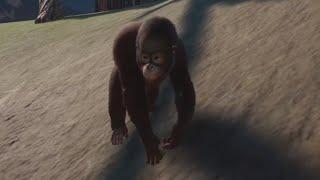 Planet Zoo #7 - PREMIERA! Ratujemy MAŁPECZKI