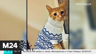 Москвичи показали, как согреваются их домашние животные - Москва 24