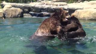 Columbus Zoo Ohio playing bears 2012 Thumbnail