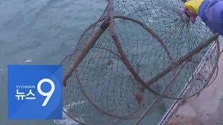 자취 감춘 남해 물메기…동해로 이사간 제주 방어
