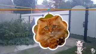 Песня котов.Песня для котов