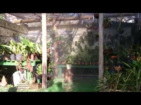 Irrigação automática no orquidário - orquideas.eco.br