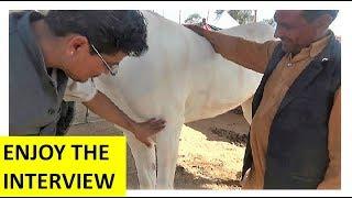 घोड़ों की जानकारी  Indian Horse Facts & Informations By Trainer In Nagaur Mela