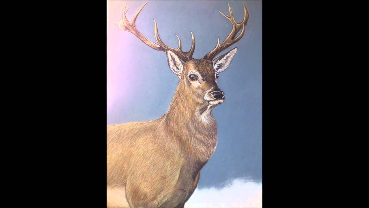 Retratos de animales) Pintando paso a paso la obra \