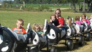 Cow Train At Washington Farms