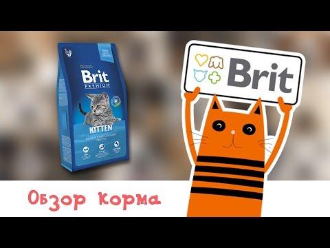 Обзор корма Brit Premium Cat Kitten