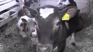 Мини-ферма в селе Дубровное Вагайского района(, 2014-12-23T10:17:53.000Z)