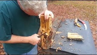 Bow Drill,  Perfectly Decayed White Oak Is GREAT for Friction Fire