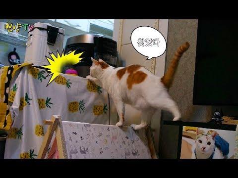 벨만 보면 누르는 고양이때문에 벨을 숨겨보았어요