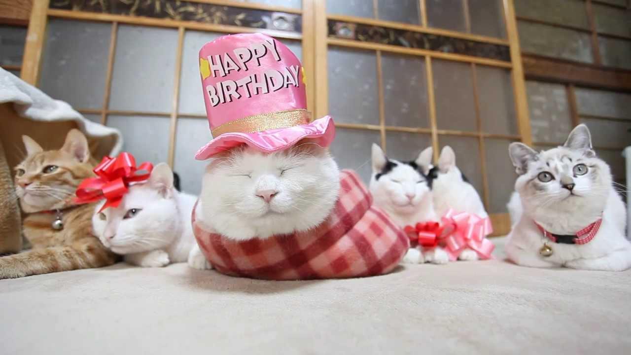 Картинки с днем рождения кота, картинки ящерица открытка