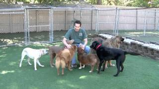 Green Level Kennel Dog Boarding & Daycare Apex, Nc