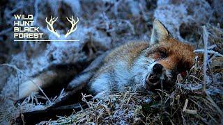 Winterfuchsjagd im Schwarzwald / Winter Foxhunting in the Blackforest