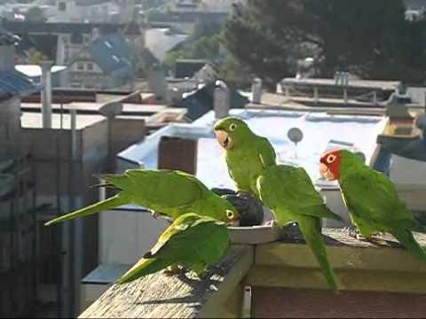 Parrots_0001.wmv