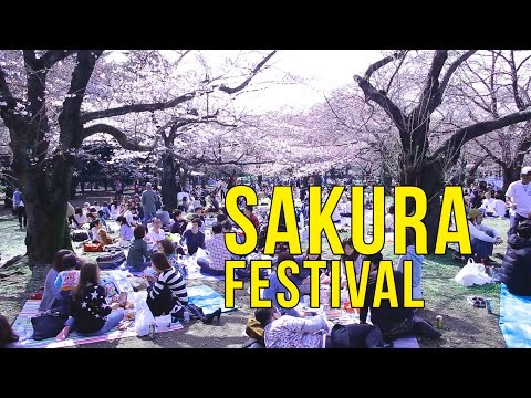 The Sakura is Blooming! - Hanami Sakura Festival Japan   Yoyogi Park