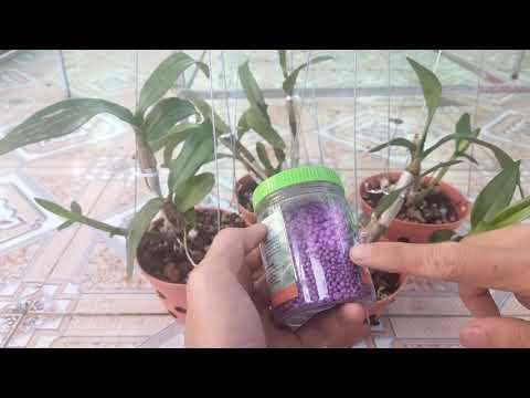 trồng và chăm sóc cây con lan dendro.dendro nắng | Foci