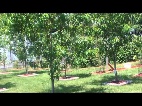 Planting Goji Berries from YouTube · Duration:  5 minutes 16 seconds