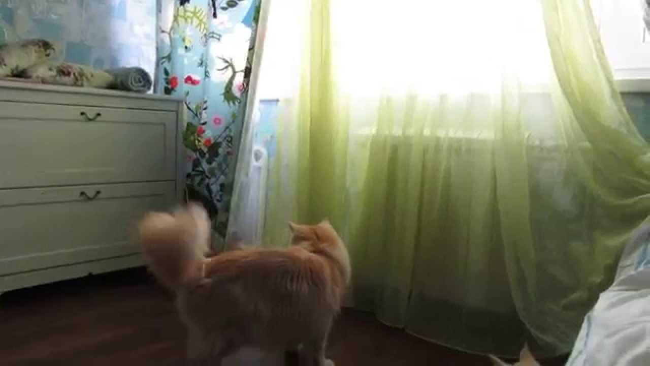 Заманить кота