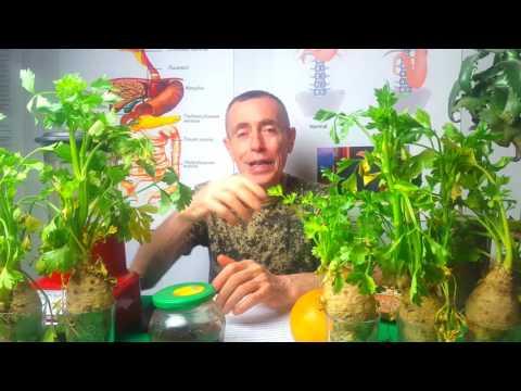 Герпес – лечение, как быстро избавиться от вируса и