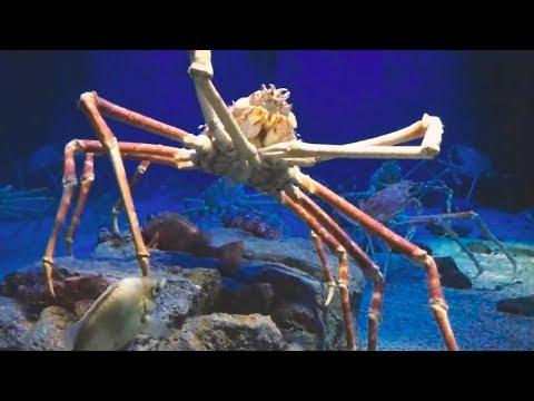 5 Giant Monsters Hidden in the Sea!