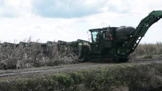 Sugarcane Harvest in the Everglades Agricultural Area