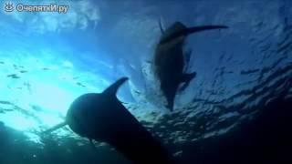 Наркотики для дельфинов